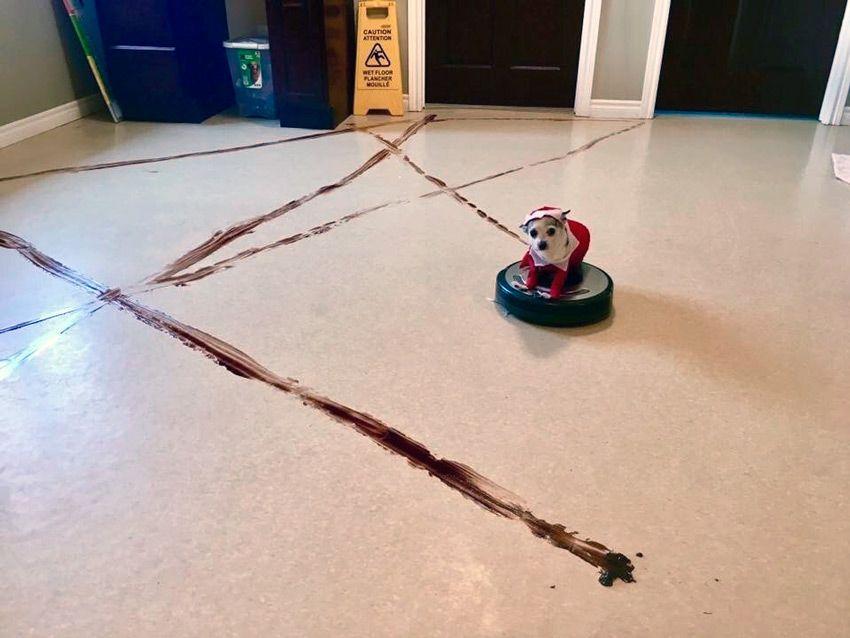 К чему может привести использование робота пылесоса